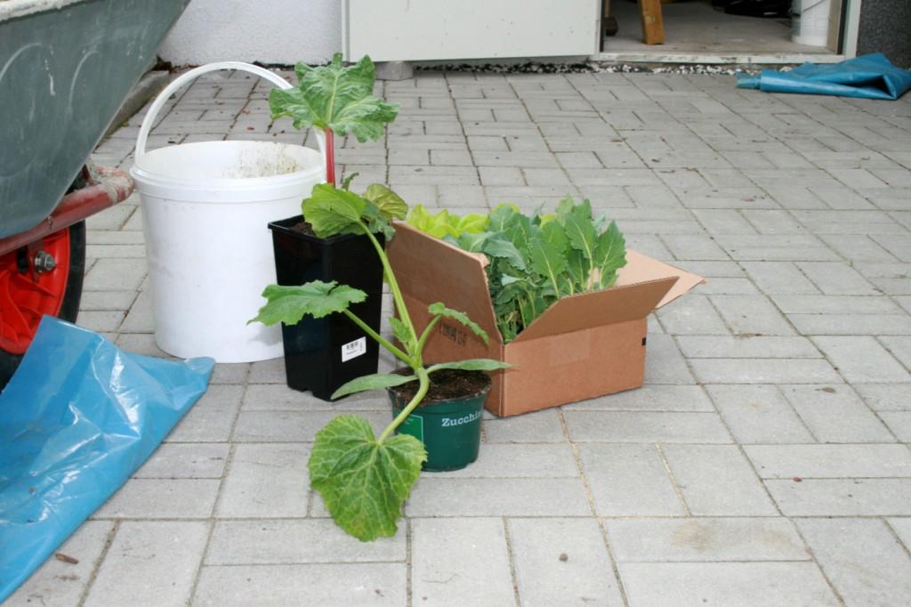 zucchini anpflanzen zucchini pflanzen severins glashaus. Black Bedroom Furniture Sets. Home Design Ideas