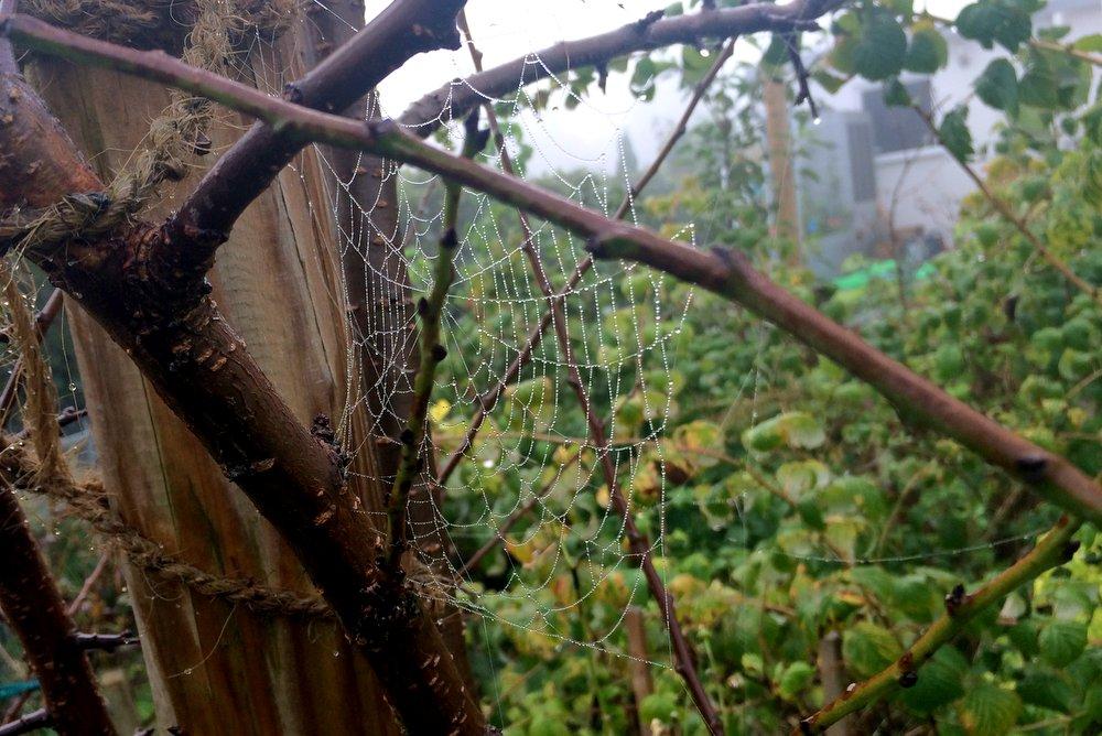 Nebeliger Herbstmorgen: Tau macht faszinierende Netzkunst sichtbar.