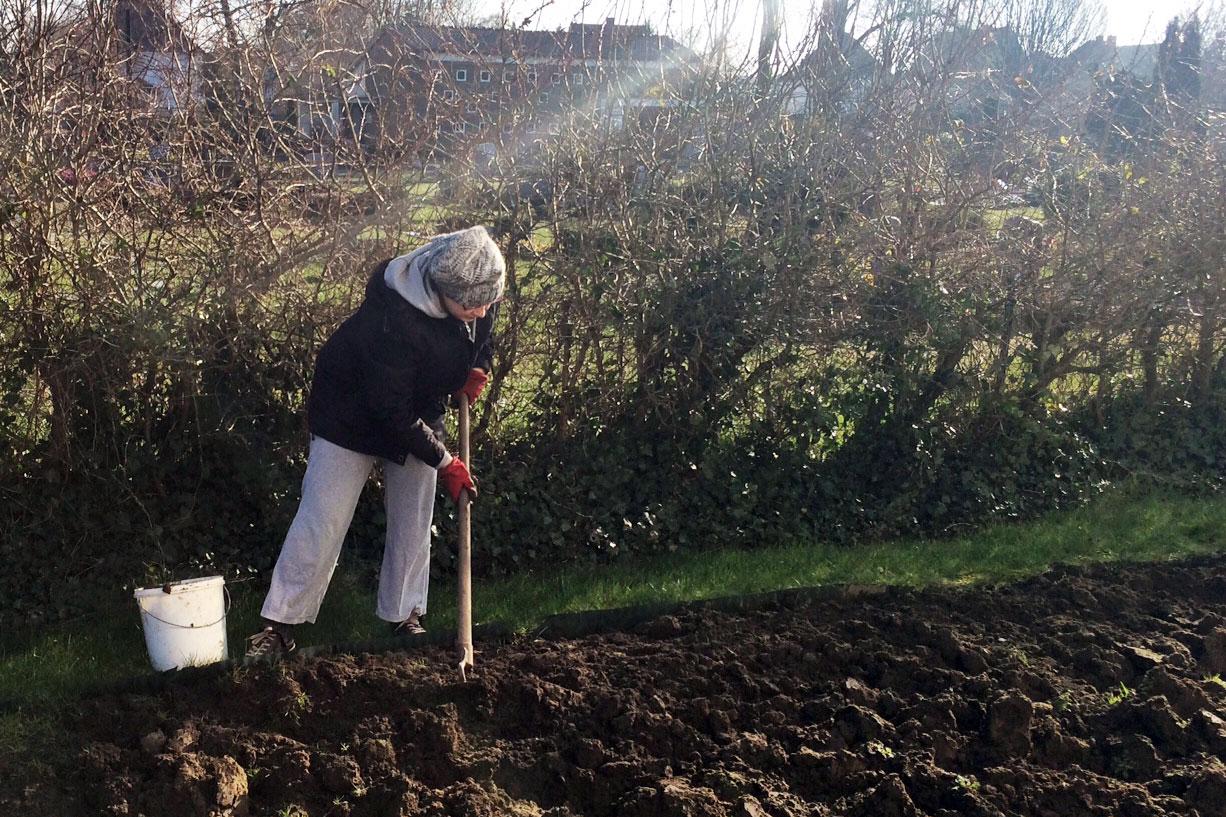 Das große Gemüsebeet spatentief umgraben und lüften: Trotz der Kälte in den vergangenen Tagen war der Boden überraschend weich.